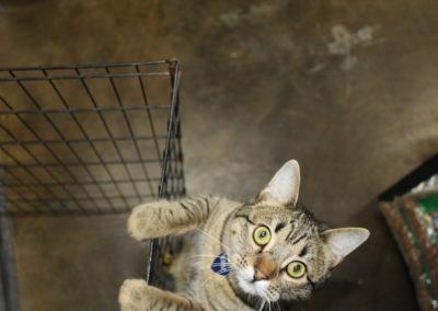 Adoptable-cat1